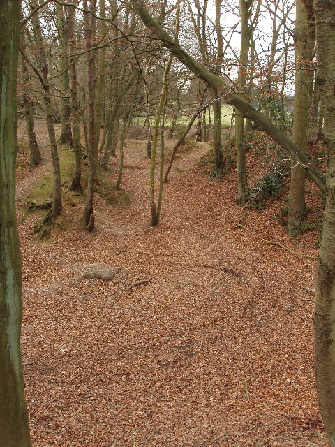 Old clay pits, Cowcroft Woods, Botley
