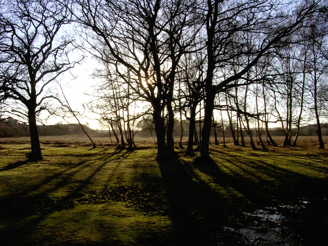 Edge of Longwater Lawn, New Forest