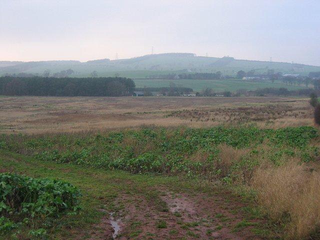 Unused field, Fans
