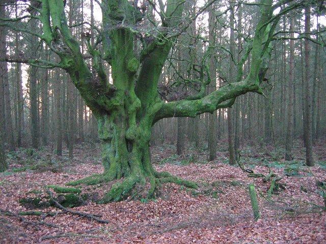 Stobbie Wood.