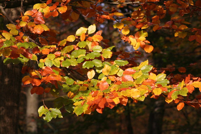 Autumn Colours - Forest of Dean