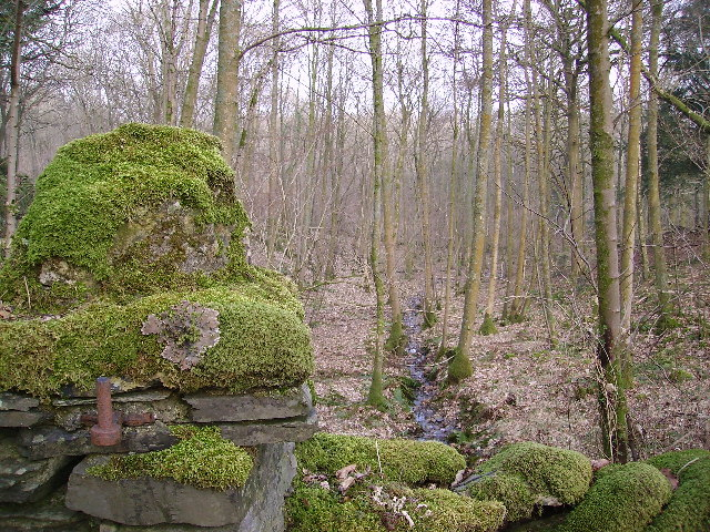 Woodland Cartmel Fell