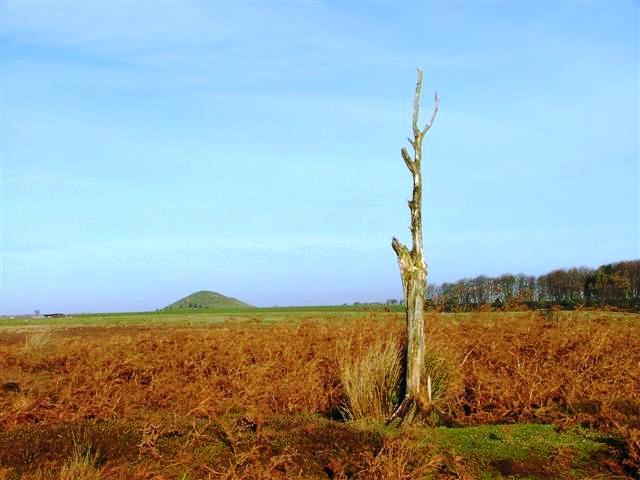 Tomgate Moor