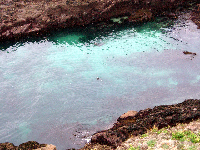 Seals in Mill Bay
