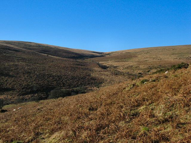 Bala Brook - Dartmoor