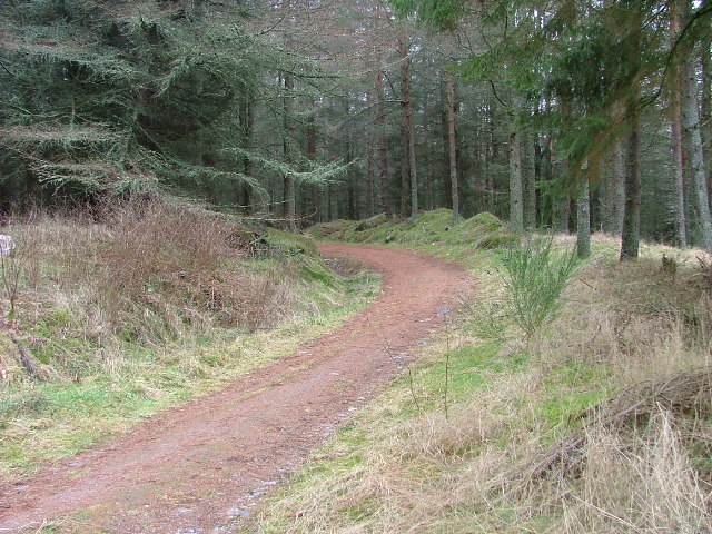 Track through Goirtean Wood