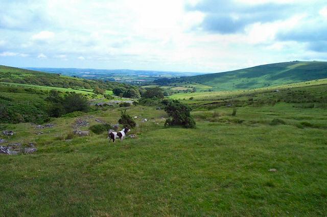 West Glaze brook - Dartmoor