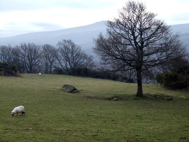 Field near Dinas Mawr