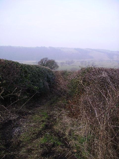 Lane Caton Green