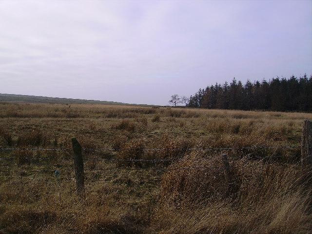 Plantation Whit Moor