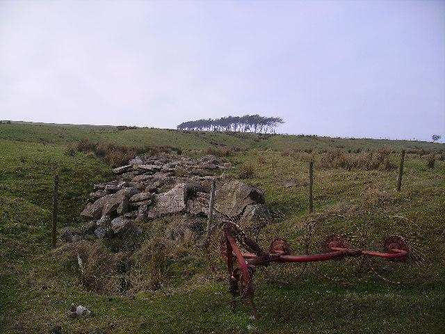 Near Thornbush Farm
