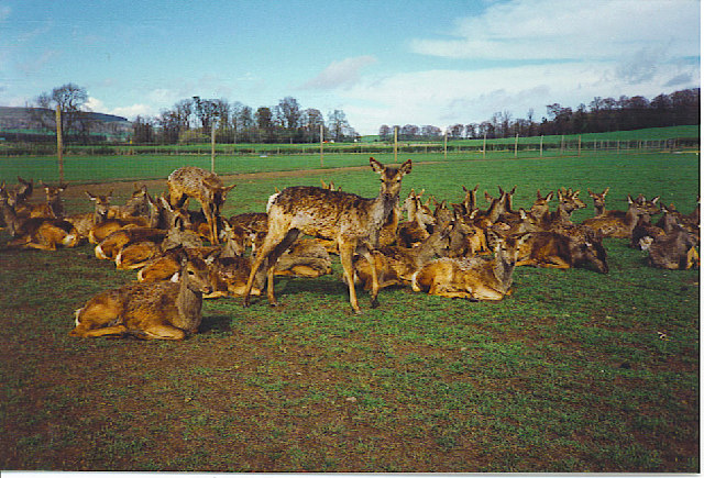 Scottish Deer Centre, Bow of Fife, Cupar.