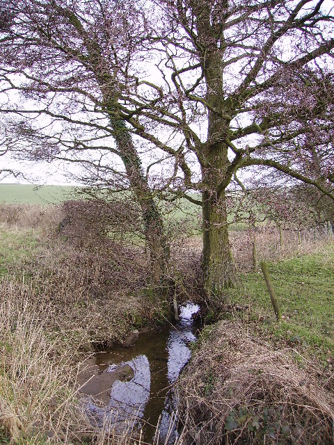 Clear Beck