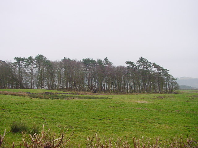 Whinneyhill Coppice
