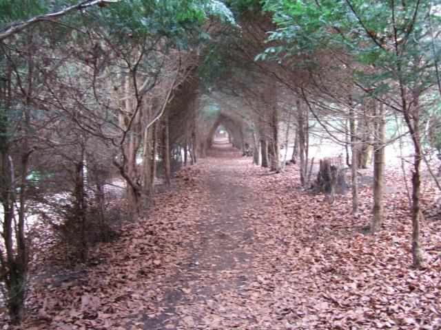 Avenue of Yew Trees