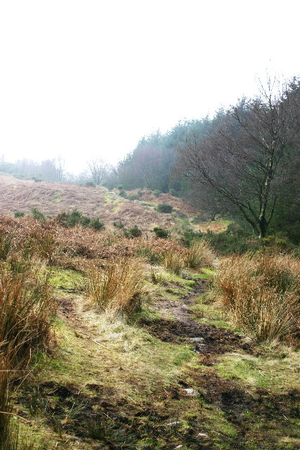 Footpath alongside Chapel Wood