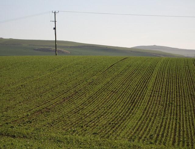 Fields near Tarrylaw