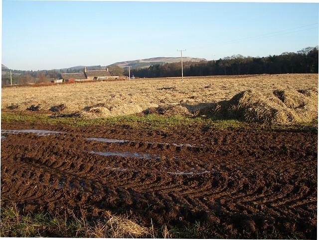 Muddy tracks at field edge