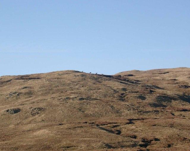 Deer on the east ridge of Meall Odhar