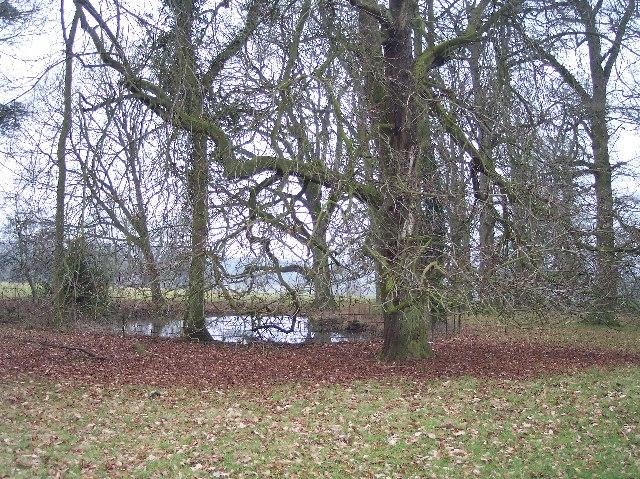 Pond, Brockhampton Park