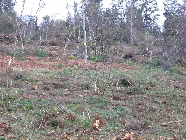 Forest Clearance