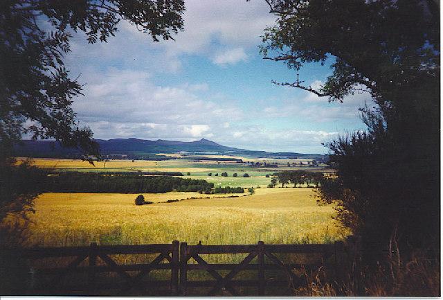 Barley Fields near Backhill of Castle Fraser