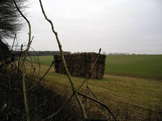Farmland north of Bushy Close