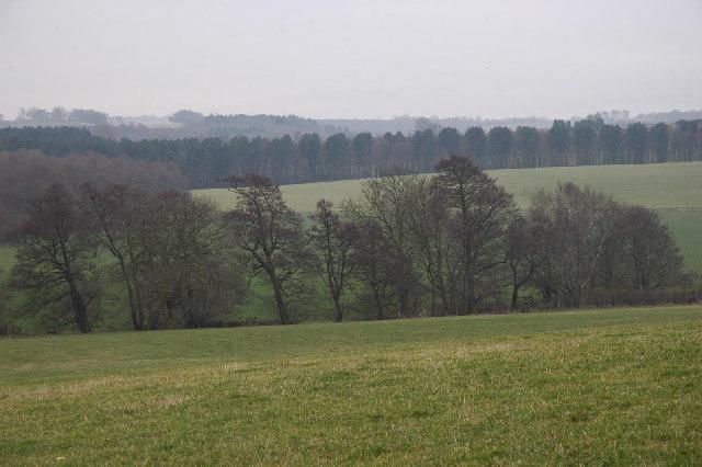 Alders along Crane Moor Dike