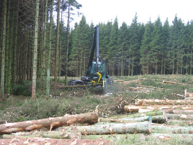 Wark Forest, men and machine at work.