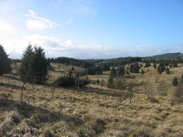 Blacka Burn Valley, Wark Forest