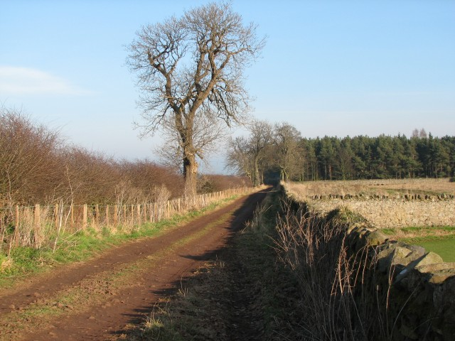 Track to Brownrig Wood