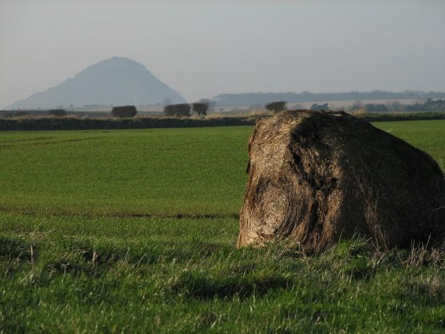 Rotten hay bale
