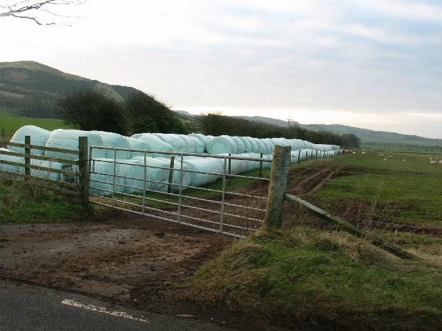 Silage bales on farmland B842 Southend road.