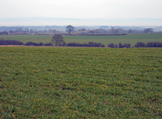 Fields near Ripon