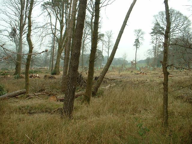 Breast Wood, Capernwray