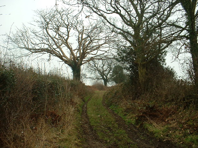Lane to Breary Wood