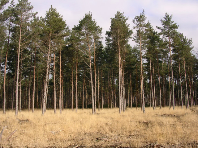 Southern edge of the Denny Inclosure, New Forest