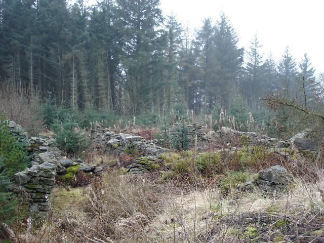Alwen forestry