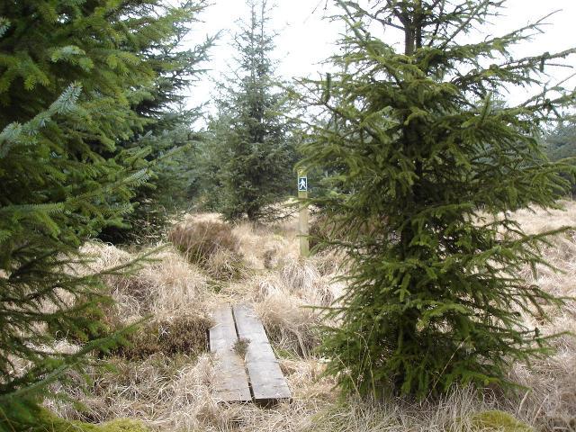 Footpath at Alwen Forest