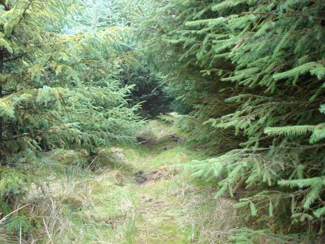 Dense forestry in the Alwen