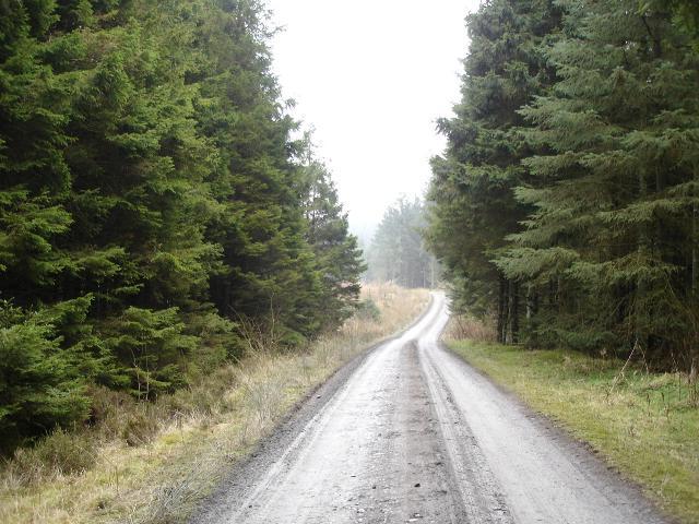 Alwen forestry track