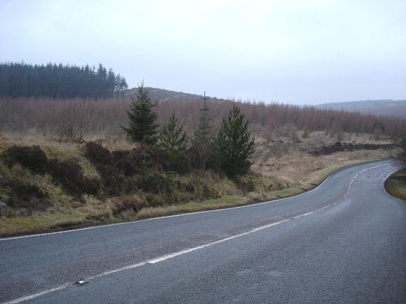 B5401 through the forestry
