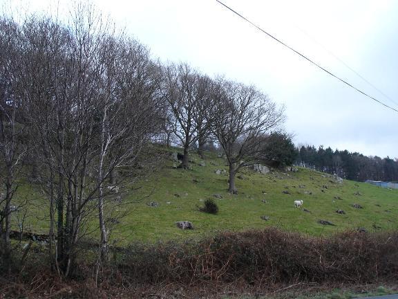 Hillside at Llanrwst