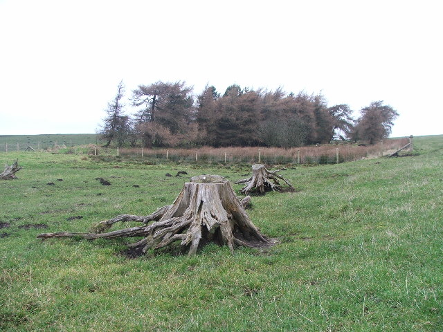 Tree Stumps on Grime Moor.
