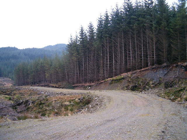 Cutting a new road in the forest