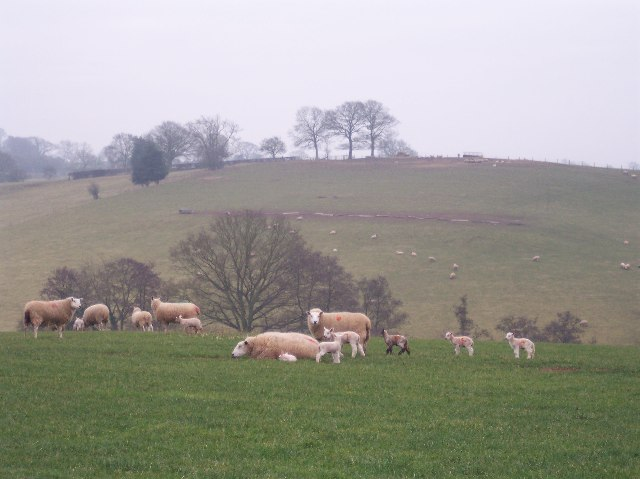 Sheep Grazing, between Hawkhurst and Pencombe