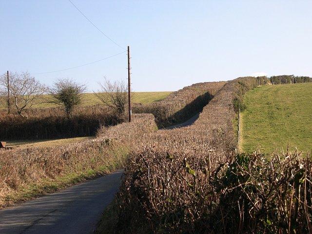 Flat Hedgetops