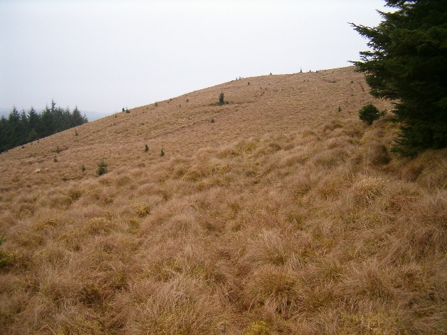Western slope of Meall na Sroine