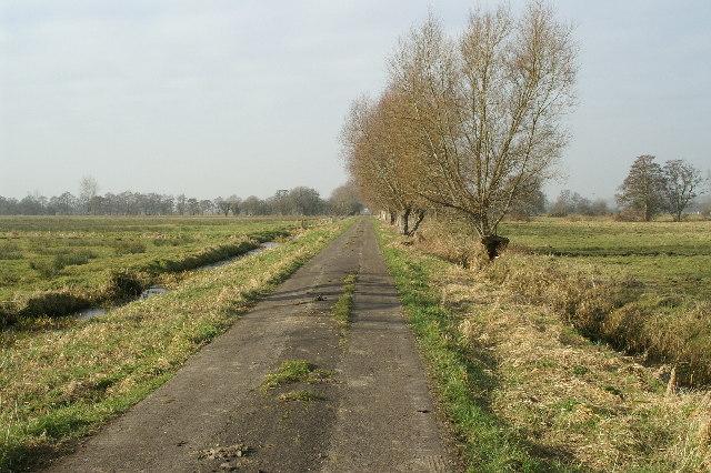 Track on Aller Moor
