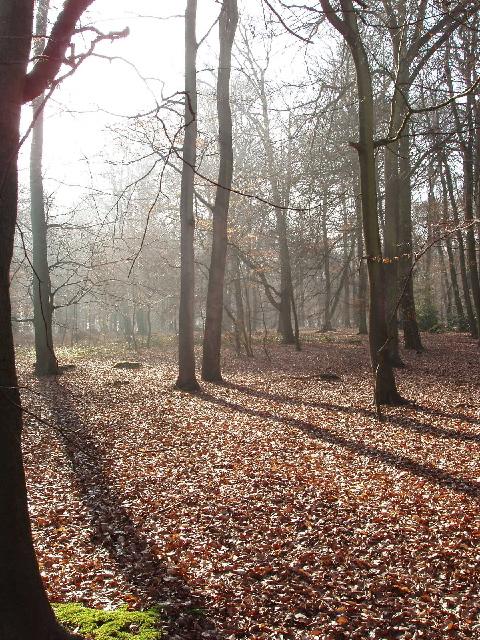 Bloom Wood, bright winter morning